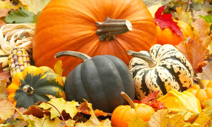 The Pumpkin Factory - Westminster Mall: $20 forEight Rides, Two Zoo Passes, and One ZooFoodat The Pumpkin Factory ($40 Value)