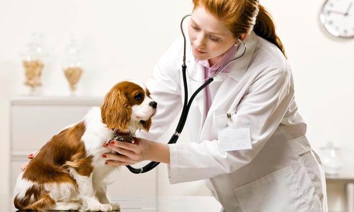 Mobile Veterinary Clinic Of North Texas - Dallas: $25 for $50 Worth of Veterinary Services — Mobile Veterinary Clinic of North Texas