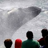40% Off Whale-Watching Cruise in Gloucester