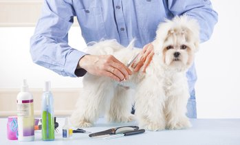 89% Off an Online Dog Grooming Course
