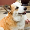 50% Off Doggie Daycare at Downtown Dog and Cats