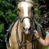 Up to 67% Off Kids' Horseback Riding in Flemington