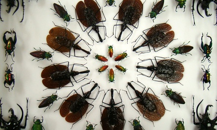 Admission for Two, Four, or Six at Insectropolis (Up to 48% Off)