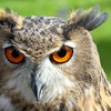 Owl, Raptor and Reptile Centre: Child (£3.50), Adult (£6)