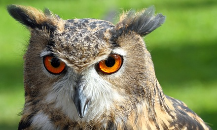 Owl Raptor and Reptile Centre, Child Ticket (£3.50), Adult Ticket (£6)