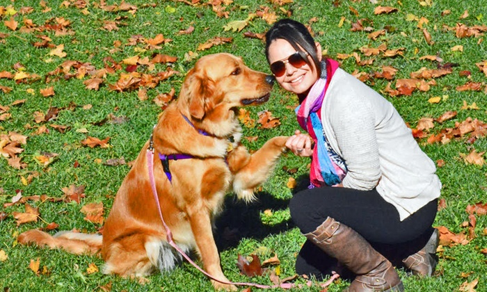 Sassy Paws Inc - Chicago: Five Dog Walks or Potty Break Visits from Sassy Paws Inc (53% Off)
