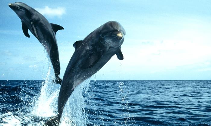Adventure Cruises - Hilton Head Island: $8 for a Dolphin Watch Nature Cruise from Adventure Cruises on Hilton Head Island (Up to $16 Value)