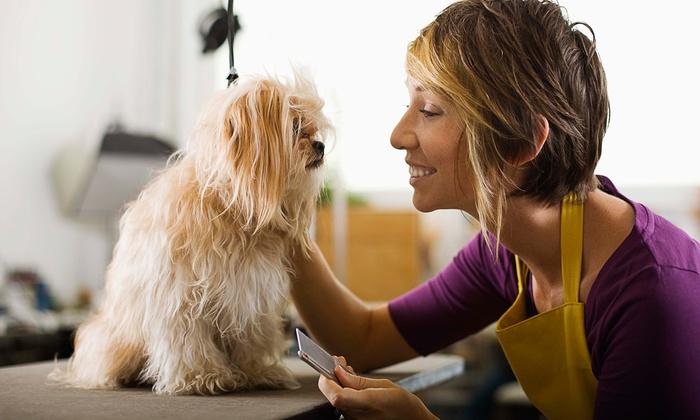 Doozydog! Club - San Diego - Ca: Dog Grooming, Boarding, or Daycare at Doozydog! Club (Up to 52% Off). Nine Options Available.