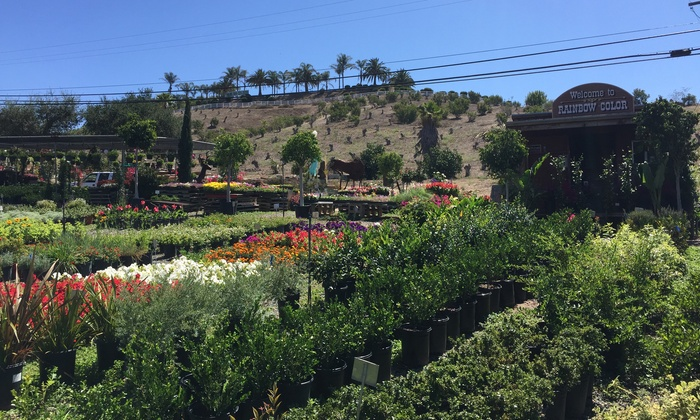 RAINBOW COLOR NURSERY - Fallbrook: $25 for $40 at Rainbow Color Nursery