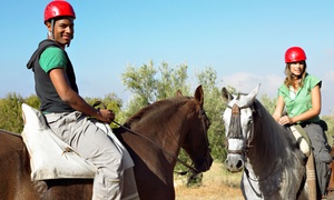 Newport Equestrian: Two or Four 60-Minute Horseback-Riding Lessons at Newport Equestrian (Up to 59% Off)
