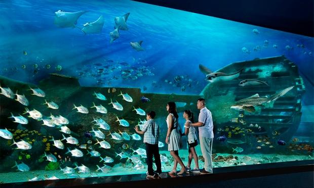 S.E.A. Aquarium & Adventure Cove 1