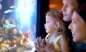 Marine-Aquarium-Senior: Wertgutschein über 20 oder 35 € anrechenbar auf das gesamte Sortiment von Marine-Aquarium-Senior