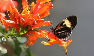 Up to 35% Off Butterfly Gardens and Bird Aviaries at Butterfly World, plus 6.0% Cash Back from Ebates.
