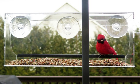 Evelots Large Suction Window Bird Feeder (Goods For The Home Patio & Garden Bird Feeders & Food) photo