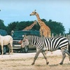 Up to 73% Off at African Safari Wildlife Park