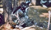Victoria Paintball Adventures - Victoria: Paintball for One or Two with Gear and Paintballs at Victoria Paintball Adventures (Up to 55% Off)