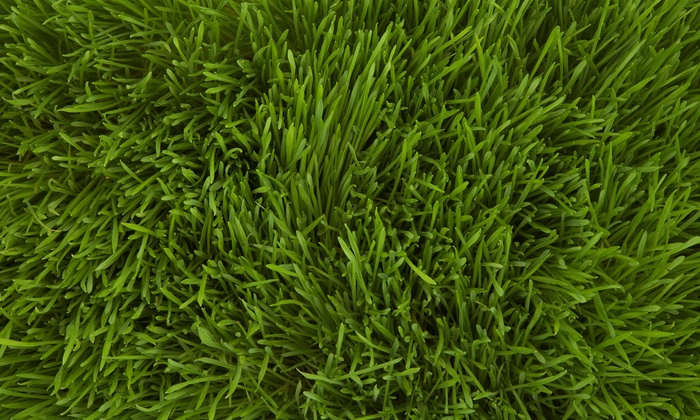 Weed Man Lawn Care - Raleigh / Durham: $49 for a Lawn-Care Package with Weed and Crabgrass Control and Fertilizer from Weed Man ($200 Value)