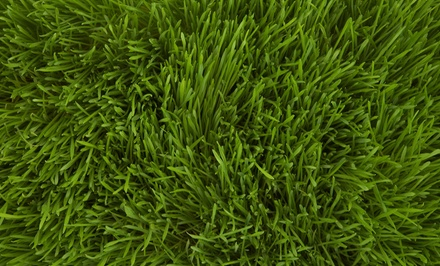 $49 for a Lawn-Care Package with Weed and Crabgrass Control and Fertilizer from Weed Man ($200 Value)