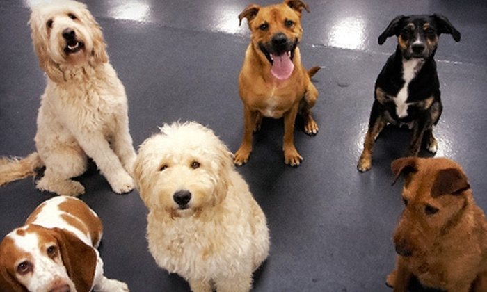 Metro Dogs Daycare & Boarding - North Loop: Two Days of Doggie Daycare or Two Nights of Doggie Boarding at Metro Dogs Daycare & Boarding (Half Off)