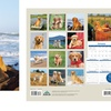 Cat and Dog Lover Wall Calendars