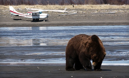 Bear-Viewing Adventure and Aerial Sightseeing Tour (a $650 value) - Alaska Bear Adventures in Homer
