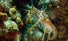 La Jolla Water Sports - Northern San Diego: Two-Hour Lobster-Diving Tour for One or Two from La Jolla Water Sports (Up to 44% Off)