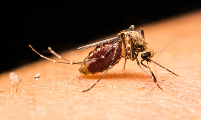 Active Pest Control - Atlanta: $39 for One Acre of Mosquito Treatment from Active Pest Control ($125 Value)