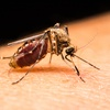 73% Off Mosquito Treatment