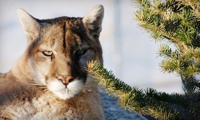 Beartooth Nature Center - Red Lodge: $25 for a One-Year Family Membership ($55 Value) or $9 for a One-Day Family-Admission Pass (Up to $19.50 Value) to Beartooth Nature Center