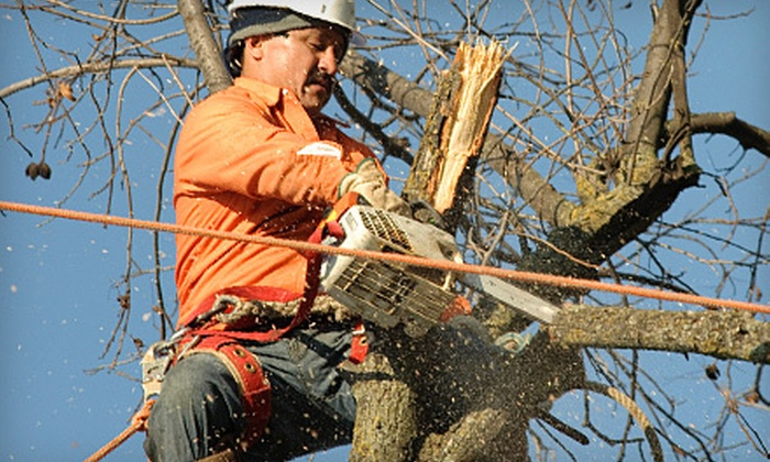 Growing Green Lawn Care - Douglas: $99 for $300 Worth of Tree-Planting, Pruning, and Removal Services from Growing Green Lawn Care