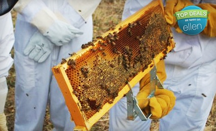 3-Hour Intro-To-Beekeeping Class for 1 (a $125 value) - Round Rock Honey in Redwood City