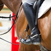 Up to 63% Off Horseback Riding in Plantation