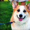 Up to 62% Off Dog-Waste Removal
