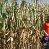 Half Off Corn Maze Outing in Olive Branch