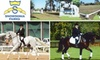 Snowdonia Farms Inc.  - Northwest Harris: $30 for One-Hour Horse Training and English-Riding Lesson at Snowdonia Farms ($65 Value)