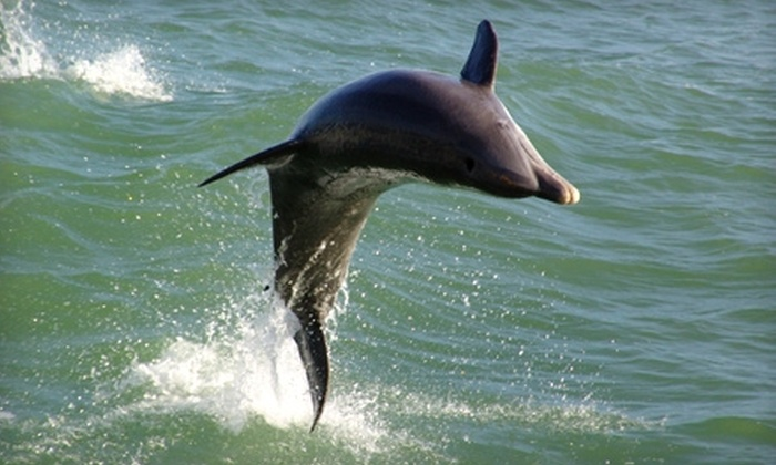 Dolphin Racer Speed Boat - South Pasedena: $10 for a High-Speed Tour on the Dolphin Racer Speed Boat in St. Petersburg ($22.95 Value)