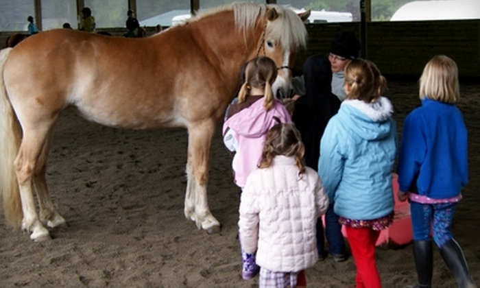 Equine Life Solutions - Bothell: Horseback-Riding Lesson at Equine Life Solutions in Bothell. Two Options Available