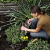 Up to 55% Off Plants at Urban Garden Center