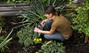 Urban Garden Center - East Harlem: Plants, Flowers, and Garden Supplies at Urban Garden Center (Up to 55% Off). Two Options Available.
