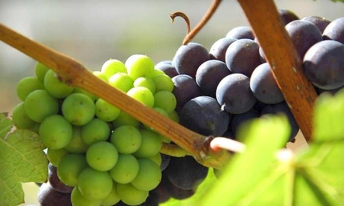 Holme Grown - Cental Napa: $64 for Luxury Wine Tour from Holme Grown ($129 Value)