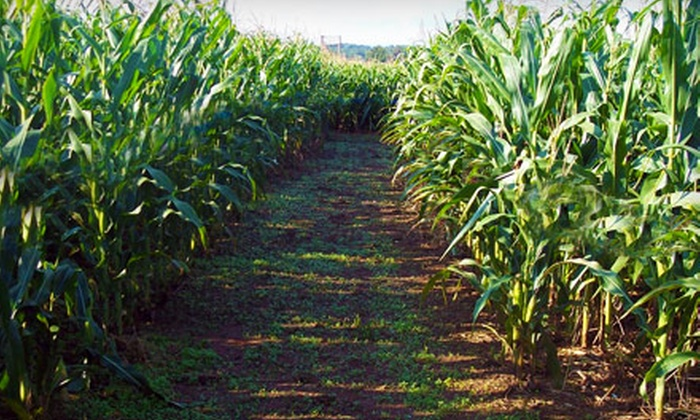 Fields Of Adventure - Aspers: $12 for Corn-Maze Admission and Zipline Ride for Two at Fields of Adventure in Aspers (Up to $26 Value)