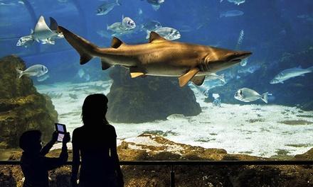 L aqu rium de barcelona entrada para adulto y ni o o 2 for Precio entrada aquarium