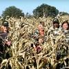 Up to Half Off Corn-Maze Admission in Hilliard