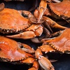 Up to 64% Off at Vince's Crab House in Middle River