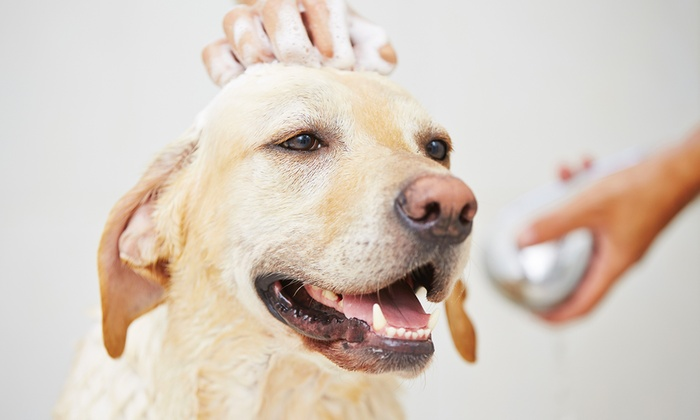 The Downtown Dog Resort & Spa - Swann Park: One-Day Doggie-Daycare Package or Three Nights of Dog Boarding at The Downtown Dog Resort & Spa (Up to 63% Off)