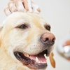 Up to 57% Off Dog Grooming at Pawparazzi Glam Mobile Salon