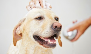 The Downtown Dog Resort & Spa: One-Day Doggie-Daycare Package or Three Nights of Dog Boarding at The Downtown Dog Resort & Spa (Up to 59% Off)