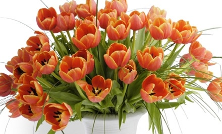 $60 Groupon to Field of Flowers - Field of Flowers in Davie