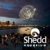 Half Off Tickets to Jazzin' at the Shedd