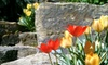 Fort Collins Nursery - Fort Collins: $17 for $40 Worth of Plants and Garden Supplies at Fort Collins Nursery